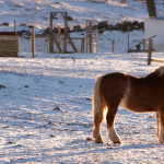 Hidden Gem: Horse Drawn Sleigh Rides