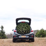 A Day at the Christmas Tree Farm
