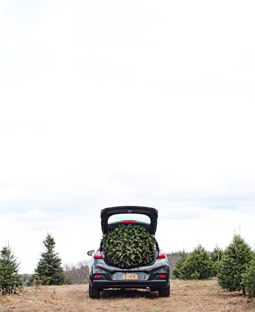 chevy-cruze-hatch-christmas-tree-trunk